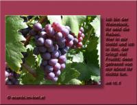 Jesus: Ich bin der Weinstock, ihr seid die Reben. Wer in mir bleibt und ich in ihm, der bringt viel Frucht; denn getrennt von mir könnt ihr nichts tun. Die Bibel: Johannes 15,5