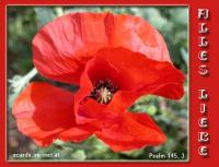 Alles Liebe Psalm 145,3 Groß ist der HERR und hoch zu loben, ja, seine Größe ist unerforschlich.