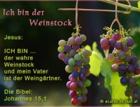 Ich bin der wahre Weinstock Jesus: ICH BIN der wahre Weinstock und mein Vater ist der Weingärtner. Die Bibel: Johannes 15,1
