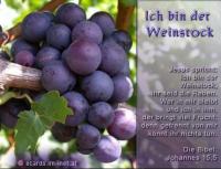 Ich bin der Weinstock Jesus: Ich bin der Weinstock, ihr seid die Reben. Wer in mir bleibt und ich in ihm, der bringt viel Frucht; denn getrennt von mir könnt ihr nichts tun. Die Bibel: Johannes 15,5