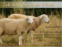 Ich bin der gute Hirte Jesus: ICH BIN der gute Hirte; der gute Hirte lässt sein Leben für die Schafe. Die Bibel: Johannes 10,11