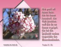 Psalm 31,20 Wie groß ist deine Güte, die du denen bewahrst, die dich fürchten, und die du an denen erzeigst, die bei dir Zuflucht suchen angesichts der Menschenkinder.