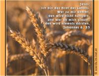 Jesus: ICH BIN das Brot des Lebens; wer zu mir kommt, wird nicht hungern und wer an mich glaubt, wird nie mehr dürsten. Die Bibel: Johannes 6,35