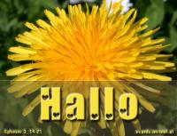 Hallo Epheser 3,14-21 Deshalb beuge ich meine Knie vor dem Vater unseres Herrn Jesus Christus, von dem jedes Geschlecht im Himmel und auf Erden den Namen erhält, dass er euch nach dem Reichtum seiner Herrlichkeit gebe, ...