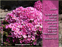 Johannes 16,33 Jesus: In der Welt habt ihr Bedrängnis; aber seid getrost, ich habe die Welt überwunden!