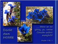 Psalm 118,1 Dankt dem HERRN, denn er ist gütig, ja, seine Gnade währt ewiglich!