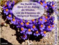 Sprüche 9,10 Die Furcht des HERRN ist der Anfang der Weisheit, und die Erkenntnis des Heiligen ist Einsicht.