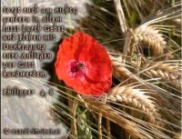 Philipper 4, 6 Sorgt euch um nichts; sondern in allem lasst durch Gebet und Flehen mit Danksagung eure Anliegen vor Gott kundwerden.