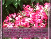 Johannes 13,34 Ein neues Gebot gebe ich euch, dass ihr einander lieben sollt, damit, wie ich euch geliebt habe, auch ihr einander liebt.