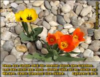 Epheser 2,8-9 Denn aus Gnade seid ihr errettet durch den Glauben, und das nicht aus euch - Gottes Gabe ist es; nicht aus Werken, damit niemand sich rühme.