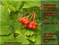 Ich wünsche dir einen gesegneten Tag! Psalm 103,8 Barmherzig und gnädig ist der HERR, geduldig und von großer Güte.