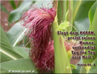 Psalm 96,2 Singt dem Herrn, preist seinen Namen, verkündigt Tag für Tag sein Heil !