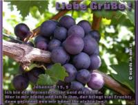 Liebe Grüße! Johannes 15,5 Ich bin der Weinstock, ihr seid die Reben. Wer in mir bleibt und ich in ihm, der bringt viel Frucht; denn getrennt von mir könnt ihr nichts tun.