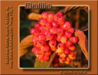 Hallo Psalm 118,1 Dankt dem HERRN, denn er ist gütig, ja, seine Gnade währt ewiglich!