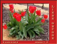 Liebe Grüße Johannes 11, 25 Jesus spricht zu ihr: Ich bin die Auferstehung und das Leben. Wer an mich glaubt, wird leben, auch wenn er stirbt.
